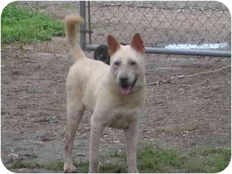 Shepherd (Unknown Type) Mix Dog for adoption in Brownsville, Texas - Phoenix