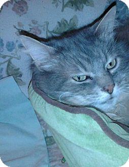 Domestic Longhair Cat for adoption in Columbus, Ohio - Peaches
