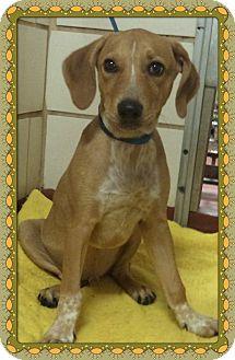 Hound (Unknown Type) Mix Puppy for adoption in Marietta, Georgia - CAPONE