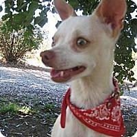 Adopt A Pet :: PHANTASY - Elk Grove, CA