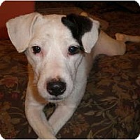 Adopt A Pet :: Tucker in Beaumont - Houston, TX