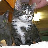 Adopt A Pet :: Rain - Dover, OH