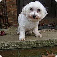 Adopt A Pet :: Parker - Mt Gretna, PA