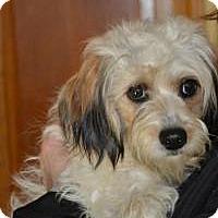 Adopt A Pet :: Fairy - Marlton, NJ