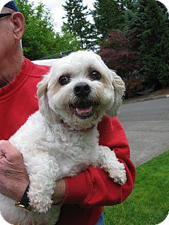Poodle (Miniature)/Bichon Frise Mix Dog for adoption in Salem, Oregon - Rosie