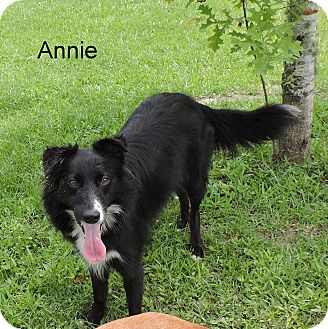 Border Collie Mix Dog for adoption in Slidell, Louisiana - Annie