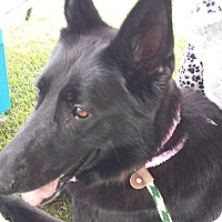 Adopt A Pet :: Gabby - Ortonville, MI