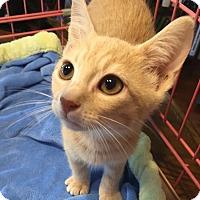 Adopt A Pet :: Sampson - Simpsonville, SC