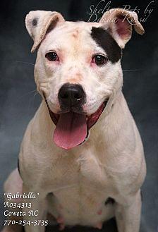 Pointer/Pit Bull Terrier Mix Dog for adoption in Newnan City, Georgia - Gabriella