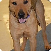 Adopt A Pet :: Rover - Munford, TN