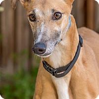 Adopt A Pet :: Jamie - Walnut Creek, CA