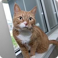 Adopt A Pet :: Golden Boy - Wilmington, DE