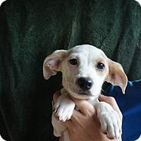 Adopt A Pet :: Narnia - Oviedo, FL