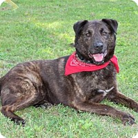 Adopt A Pet :: PINTO-FOSTER HOME OR FOREVER HOME NEEDED - Salem, NH
