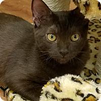 Adopt A Pet :: Quincy - Trevose, PA