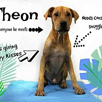 Adopt A Pet :: *THEON - Sugar Land, TX