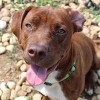 Adopt A Pet :: Gendry 9742 - Columbus, GA