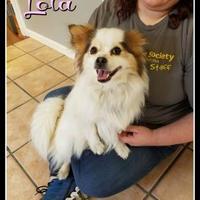 Adopt A Pet :: Lola - Greenville, NC