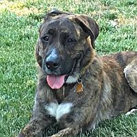 Adopt A Pet :: Blossom - Sunnyvale, CA