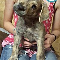 Adopt A Pet :: Zion - Kimberton, PA