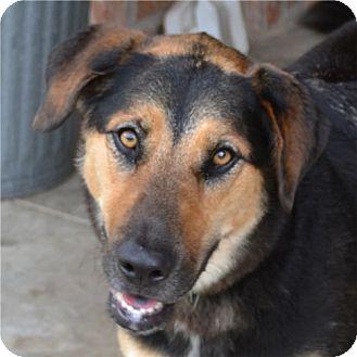 German Shepherd Dog/Hound (Unknown Type) Mix Dog for adoption in Weatherford, Texas - Zoey