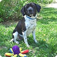 Adopt A Pet :: Logan - Mocksville, NC