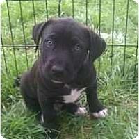 Adopt A Pet :: Kaniko - Justin, TX