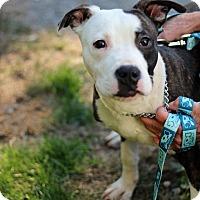 Adopt A Pet :: Miquel - Tinton Falls, NJ
