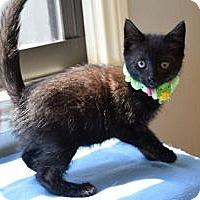 Adopt A Pet :: Maxis - Colorado Springs, CO