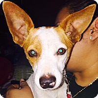 Adopt A Pet :: Freddie - hollywood, FL