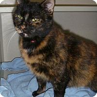 Adopt A Pet :: Sweetie - Hamburg, NY