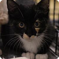 Adopt A Pet :: Tammy - Sacramento, CA