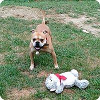 Adopt A Pet :: Darla - Winchester, VA