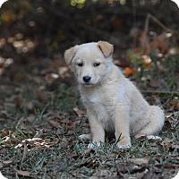 Adopt A Pet :: keeper - South Dennis, MA