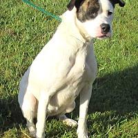 Adopt A Pet :: Veronica - Reeds Spring, MO