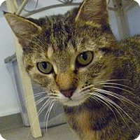 Adopt A Pet :: Emily Rose - Hamburg, NY