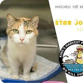 Domestic Shorthair Cat for adoption in Davenport, Iowa - Star Jones