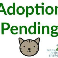 Adopt A Pet :: Bean - Seattle, WA