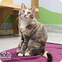 Adopt A Pet :: TETLEY - Irvine, CA