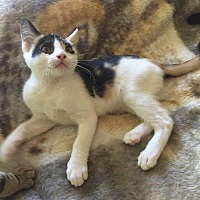 Adopt A Pet :: Kayla - Lodi, CA