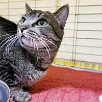 Adopt A Pet :: Little T - Balto, MD