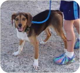 Beagle Mix Dog for adoption in Columbus, Ohio - Mary-Kate