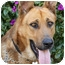 Photo 1 - German Shepherd Dog Mix Dog for adoption in Los Angeles, California - Blue von Benningen