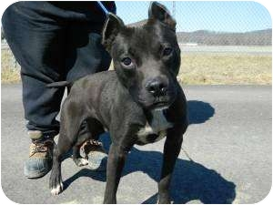 Labrador Retriever Mix Dog for adoption in Proctorville, Ohio, Ohio - DD