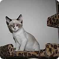 Adopt A Pet :: Rembrandt - Santa Rosa, CA