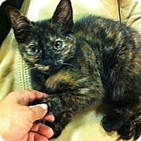Adopt A Pet :: Crumble - Atlanta, GA