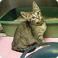 Adopt A Pet :: Farrah - Dover, OH