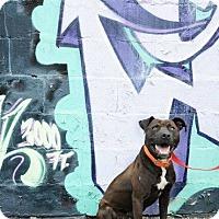 Adopt A Pet :: Pinot - Laingsburg, MI