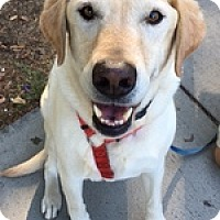 Adopt A Pet :: BeeOBee - Torrance, CA