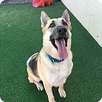 Adopt A Pet :: Mac - Sacramento, CA